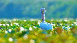 Danube Delta Day Trip