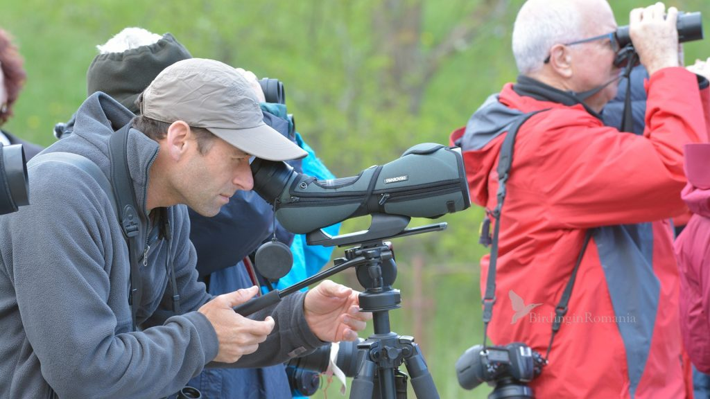 private birding tour in romania