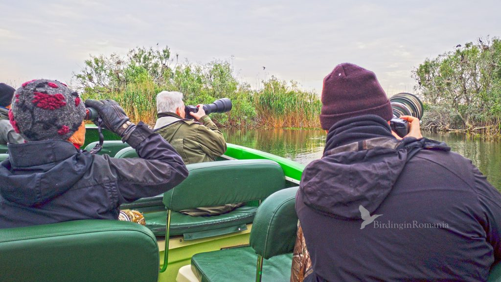 danube delta birdwatching