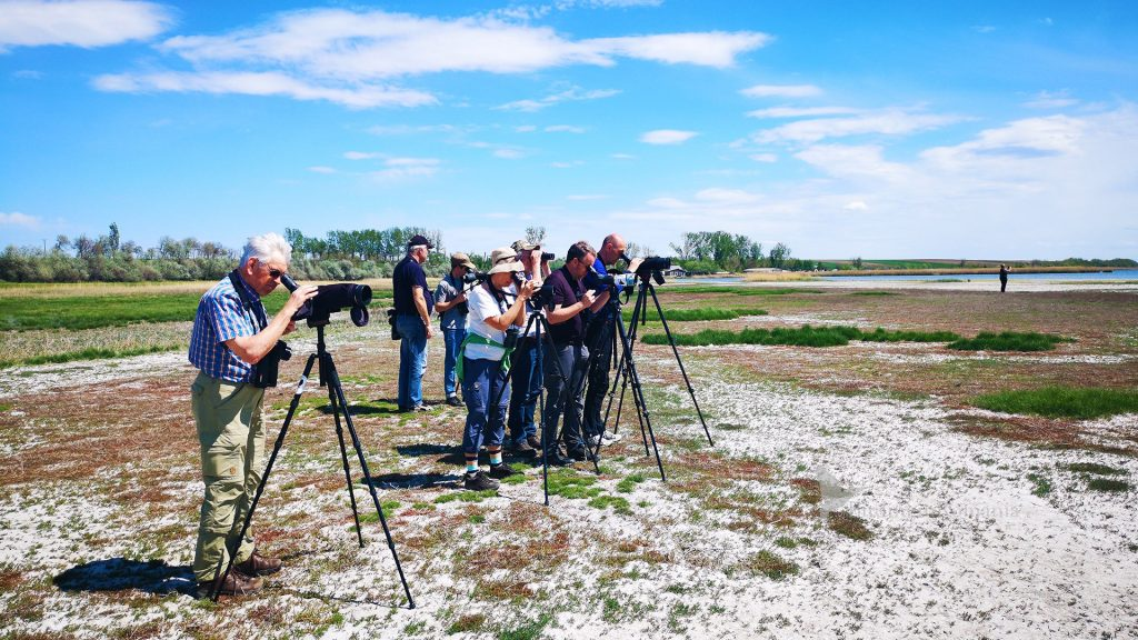 birdwatching in romania